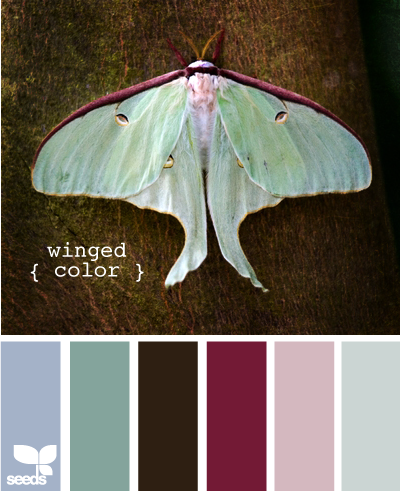 WingedColor615